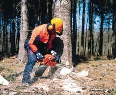 Forsttechnik - Kettensäge